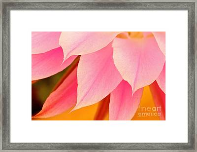 Flower Feathers Framed Print by Michael Cinnamond