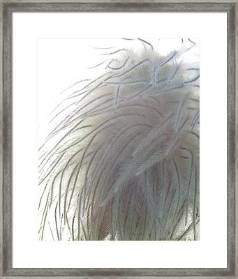 Framed Print featuring the photograph Floral Feathers by Ramona Johnston