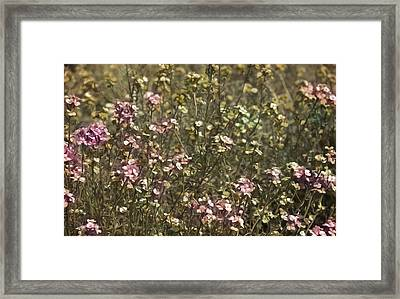 Flower Field Framed Print by Svetlana Sewell