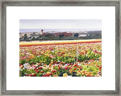 Flower Fields In Carlsbad 1992 Framed Print by Mary Helmreich