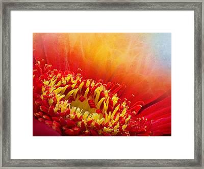 Flower Fragrance Framed Print by Lutz Baar