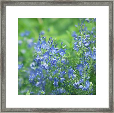 Flower Frenzy Framed Print by Kim Hojnacki