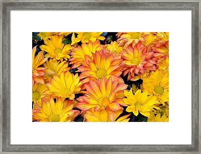 Flower  Framed Print by Gandz Photography