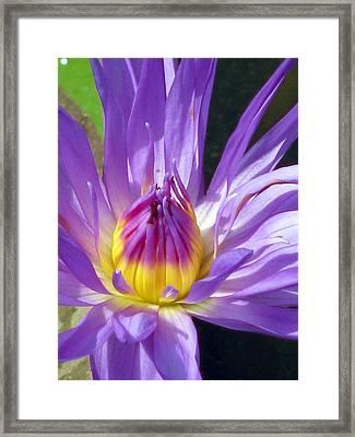 Flower Garden 70 Framed Print