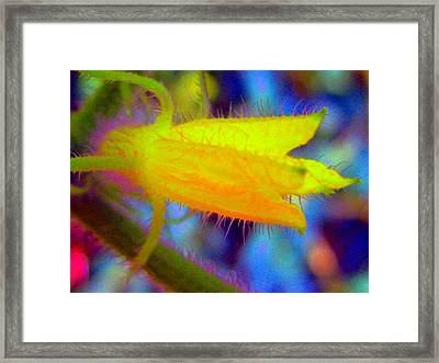 Flower - Garden - Cucumber Framed Print by Susan Carella