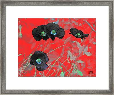 Flower Garden -  Four Black Poppies On Red Framed Print