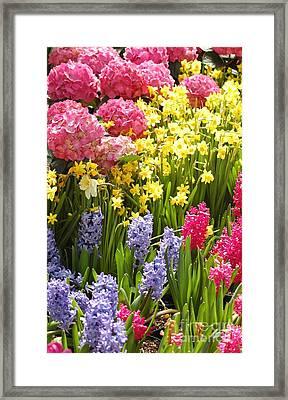 Flower Glory Framed Print by Kathleen Struckle