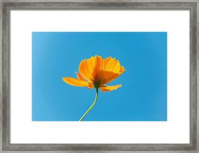 Flower - Growing Up In Brooklyn Framed Print by Mike Savad