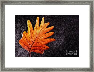 Flower Grows In Rain Framed Print by Manjot Singh Sachdeva