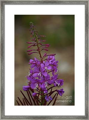 Flower I Framed Print