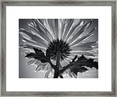Flower IIi Framed Print by Liesl Marelli