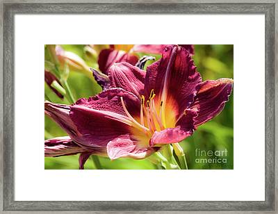 Flower IIi Framed Print