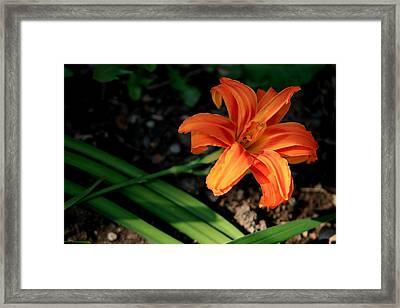Flower In Backyard Framed Print
