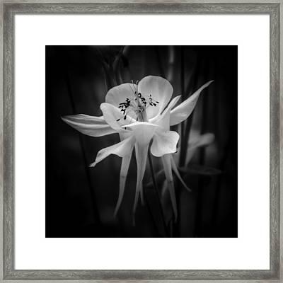 Flower In Black And White 1 Framed Print
