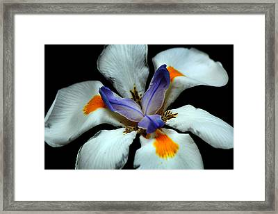 Flower In Bloom Framed Print by Chris Whittle