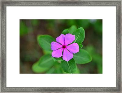 Flower In Garden Framed Print by Artpixelgraphy Studio