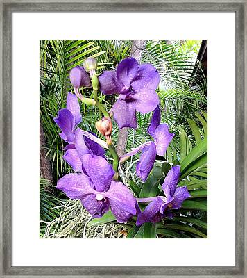 Flower In Monet's Garden France Framed Print