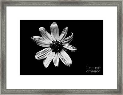 Flower In The Dark Framed Print by Xn Tyler