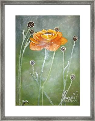 Flower In The Mist Framed Print by Judy Morris