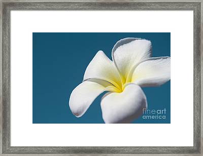 Flower In The Sky Framed Print by Sharon Mau