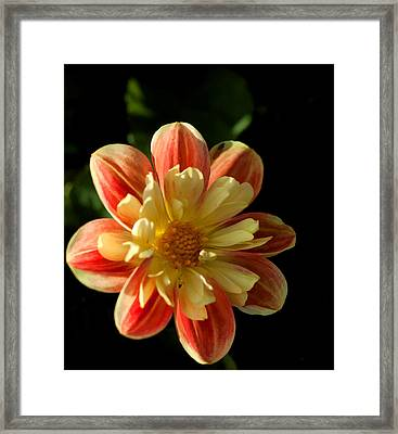 Flower In The Sun Framed Print