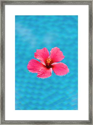 Flower In The Water For Decoration Framed Print by Keren Su