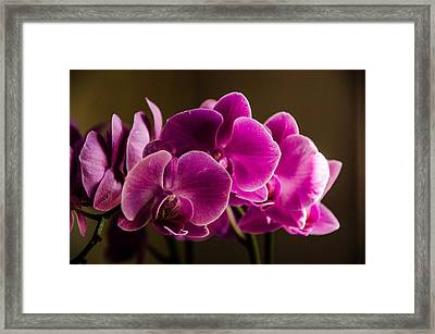 Flower In The Window Light Framed Print