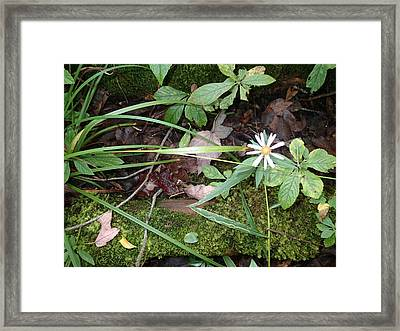 Flower In The Woods Framed Print by Robert Nickologianis