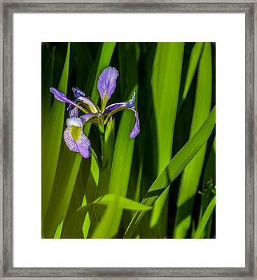 Flower Framed Print by Jennifer Burley