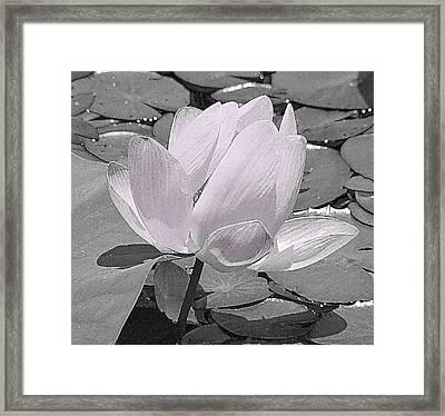 Flower Lilly Pad Framed Print