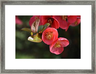 Flower Love Framed Print by Sheldon Blackwell