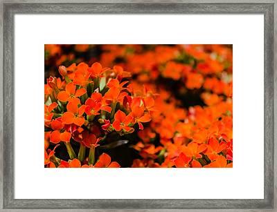 Flower Macro 1 Framed Print