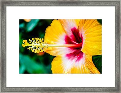 Flower Macro 2 Framed Print
