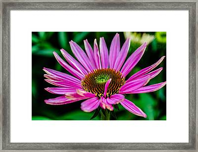 Flower Macro 3 Framed Print