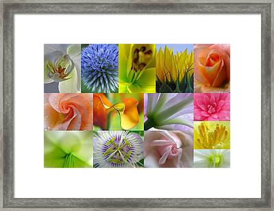 Flower Macro Photography Framed Print