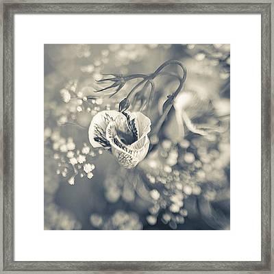 Flower Framed Print by Mark-Meir Paluksht