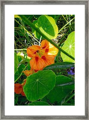 Flower Medley Framed Print