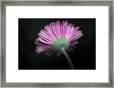 Framed Print featuring the photograph Flower by Nick Mares