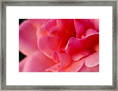 Flower No 3 Framed Print
