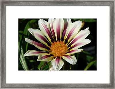 Flower Number 2 Framed Print