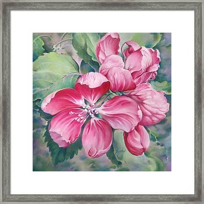 Flower Of Crab-apple Framed Print