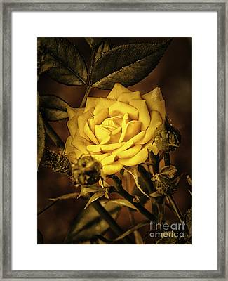 Flower Of Friendship  ... Framed Print