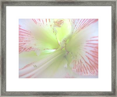 Flower Of Light Framed Print