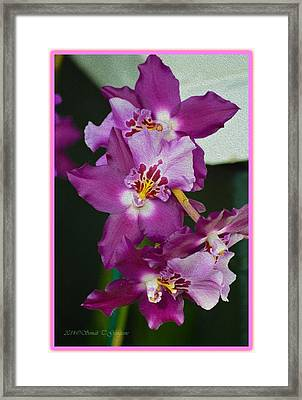 Flower Of Magnificence  Framed Print by Sonali Gangane