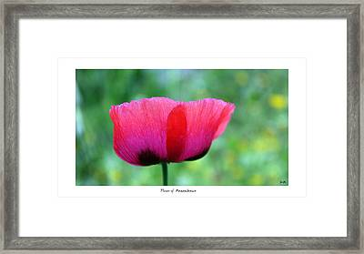 Flower Of Remembrance Framed Print by Martina  Rathgens