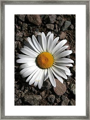 Flower On The Rocks Framed Print