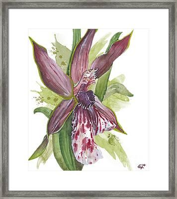 Flower Orchid 10 Elena Yakubovich Framed Print by Elena Yakubovich