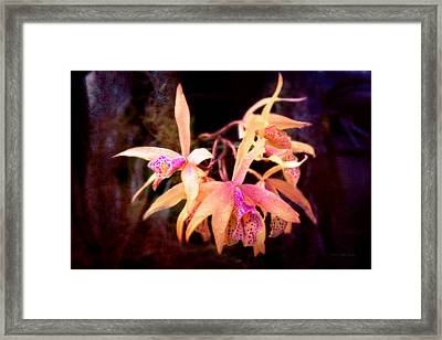 Flower - Orchid - Laelia - Midnight Passion Framed Print by Mike Savad