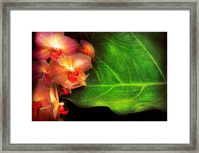 Flower - Orchid - Phalaenopsis Orchids At Rest Framed Print by Mike Savad