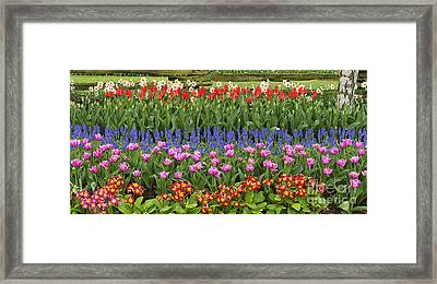 Flower Panorama Framed Print